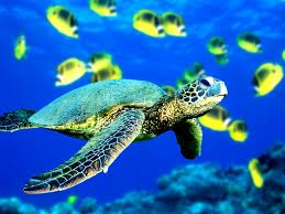 Sonho com Tartaruga marinha
