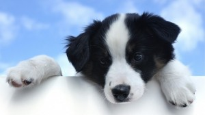 Cachorro manso